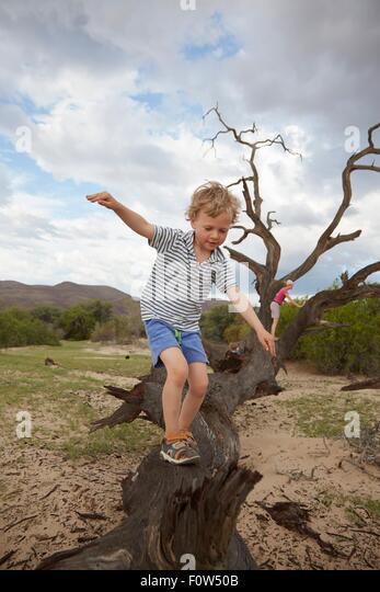 Boy climbing on dead tree, Purros, Kaokoland, Namibia - Stock Image