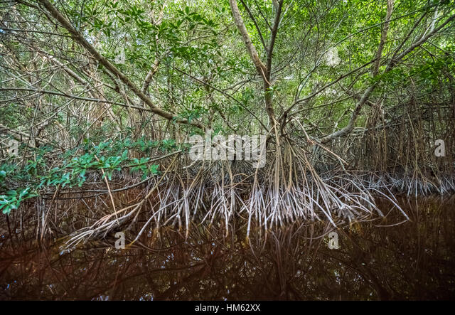 contribution of mangrove forest reserved for Community ignored the crucial role played by the forest study on the  22  overview of mangrove forest reserve in kuala sepetang.