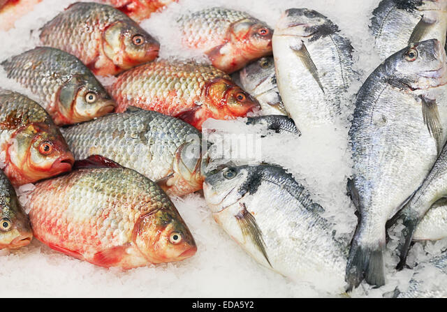 Fresh fish counter stock photos fresh fish counter stock for Fresh fish store