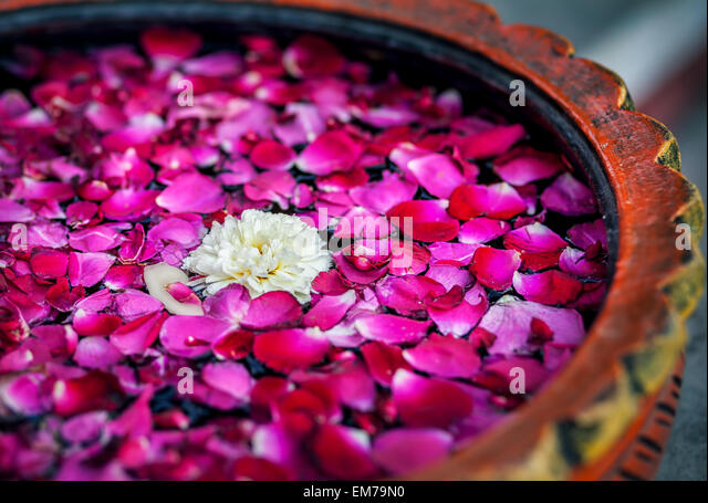 White flower with red rose petals in the bowl in SPA salon - Stock-Bilder