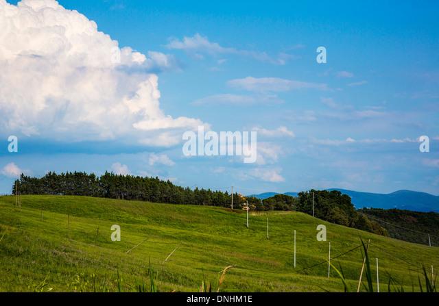 Tress on a landscape, Volterra, Province of Pisa, Tuscany, Italy - Stock-Bilder