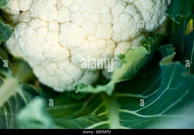 Cauliflower, close-up - Stock Image