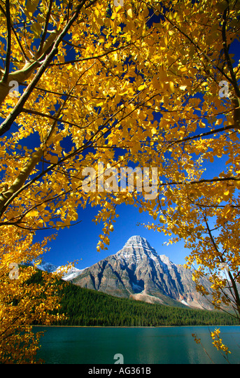 Autumn Colors with Mount Chephren at Waterfowl Lake Banff National Park Alberta Canada - Stock-Bilder