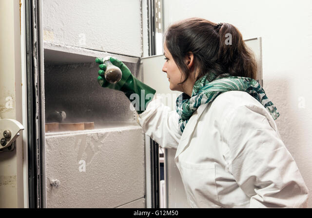 Researcher inspect fungus cultures in the laboratory freezer. - Stock-Bilder