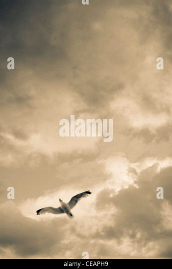 Sea Gull and sky - Stock Image