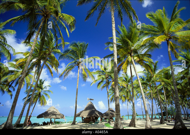 Dominican Republic Punta Cana Palm trees and palapas on beach - Stock Image