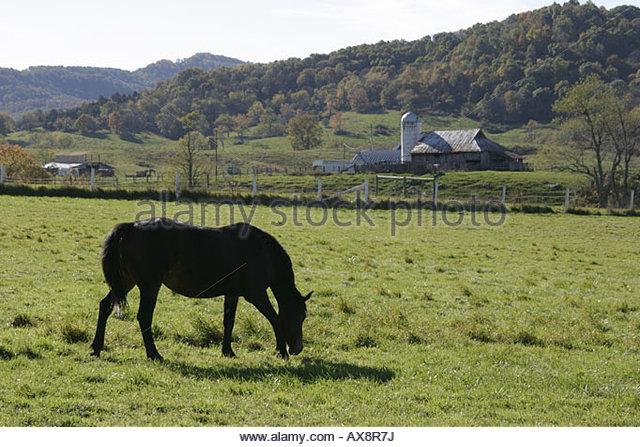 West Virginia Frankford rural scene horse farmland - Stock Image
