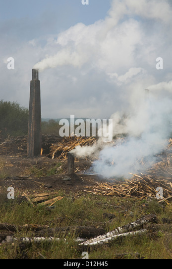 Palm oil – deforestation for everyday products