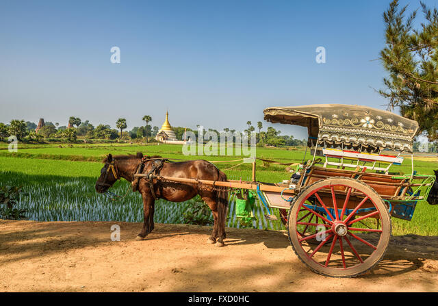 Horse drawn carriage  for an ancient temples tour in Myanmar - Stock Image