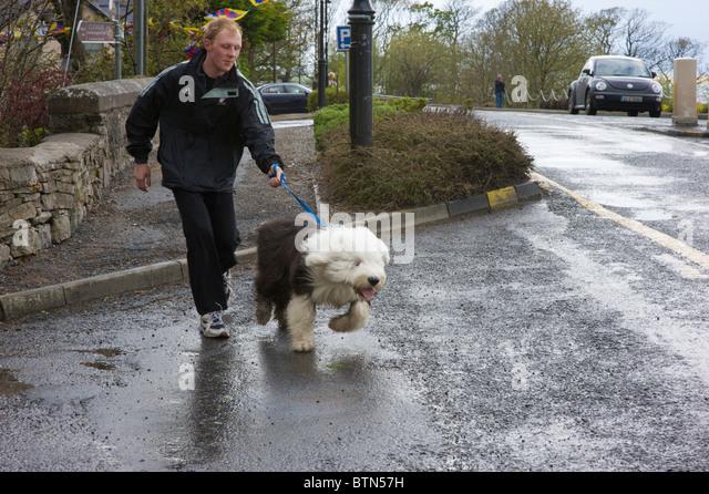 Shaggy Dog Sheep Dog Stock Photos & Shaggy Dog Sheep Dog Stock Images ... Old English Sheepdog Kent