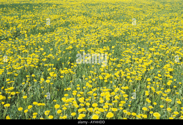 Blumenteppich Stock Photos & Blumenteppich Stock Images