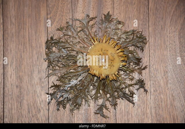 Thistle on a door of La Bastide Clarence, France - Stock Image