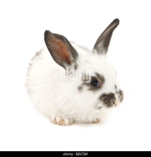 rabbit isolated on white background - Stock Image