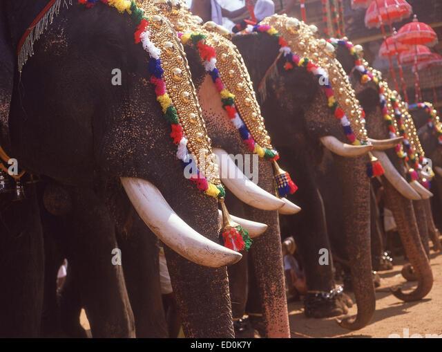 Kerala Elephant Festival (Thrissur Pooram), Thrissur, Kerala, Republic of India - Stock-Bilder
