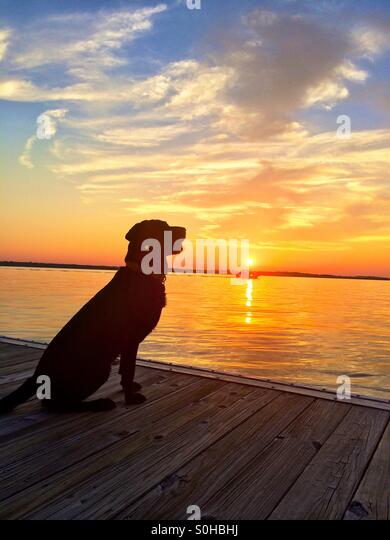 Dog watching boats at sunset - Stock-Bilder