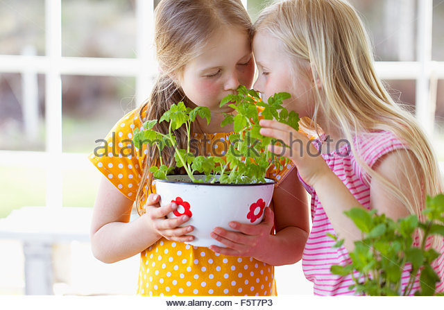 Finland, Girls (8-9) smelling tomato seedlings - Stock Image
