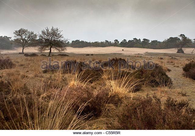 The Netherlands, Loon op Zand, National Park De Loonse en Drunense Duinen. Heath landscape. - Stock-Bilder