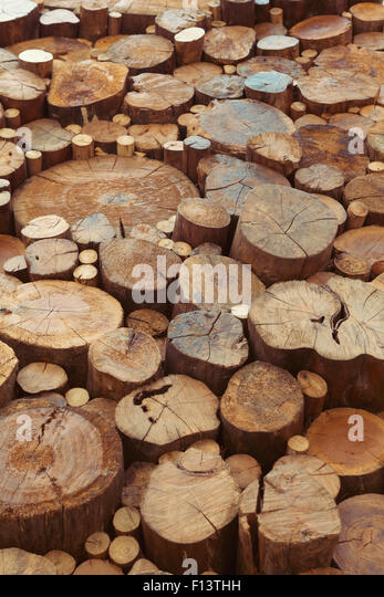 Natural background. Old teak wood stumps with cracks and annual rings - Stock-Bilder