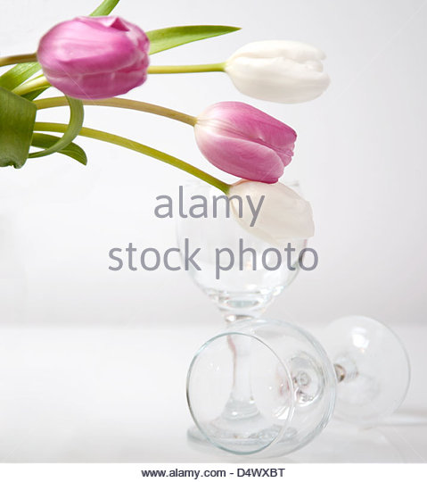 Still life of vase of tulips and two wine glasses - Stock Image