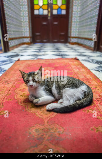 Cat resting over arabic carpet at entry of Moroccan Ryad or hostel, Tetouan, Morocco - Stock Image