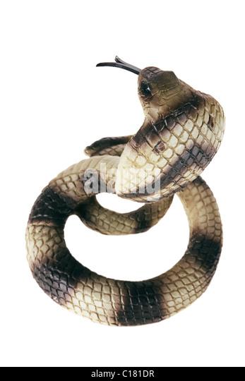 Rubber Cobra - Stock Image