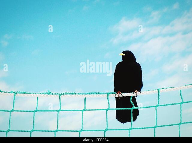 Close-Up Low Angle View Of Bird Against Blue Sky - Stock Image