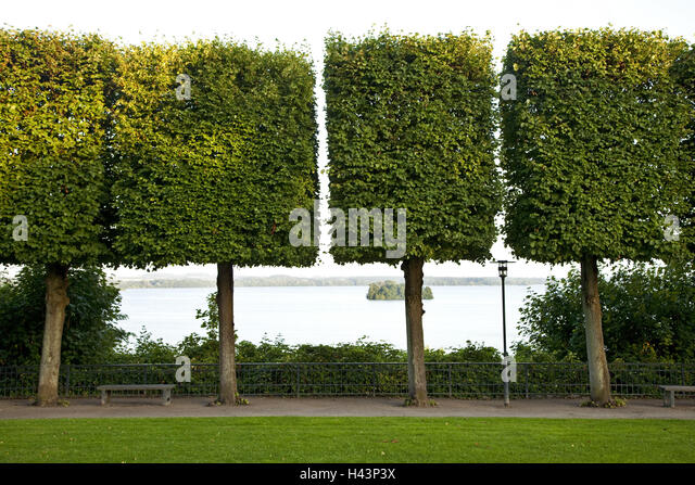 Trees, form editing, squarely, - Stock Image