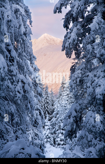 Winter scenic of snow covered spruce trees and Chugach Mountains near Girdwood, Alaska - Stock-Bilder