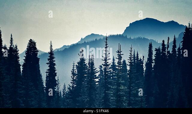 Forest silhouette with mountain background - Stock Image