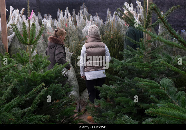 Mother and daughter choosing Christmas Tree at Garden Centre, Radyr, near Cardiff, South Wales, UK - Stock Image