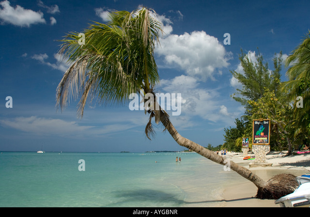 Jamaica Negril beach palm tree - Stock Image