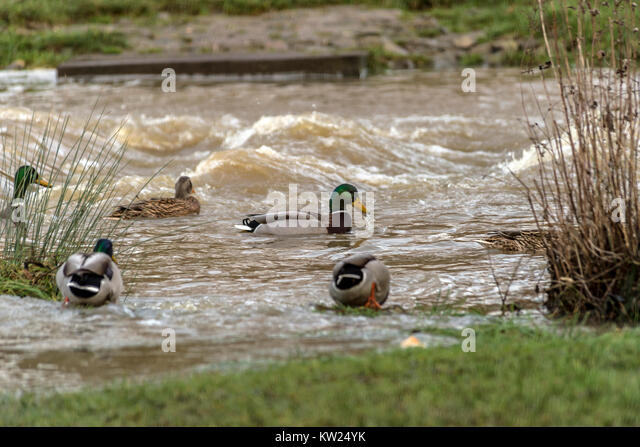 Melton Mowbray, UK. 30th December, 2017. High rain fall and melting snow, created flooded areas, river Wreake flows - Stock Image