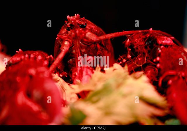 Germany, Close up of lobster - Stock-Bilder