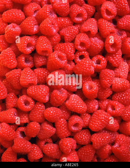 Background of Fresh Red Raspberries - Stock Image