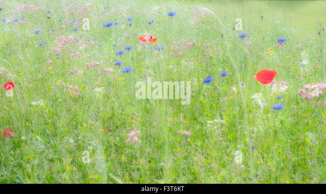 Meadow at Chatsworth House - Stock Image