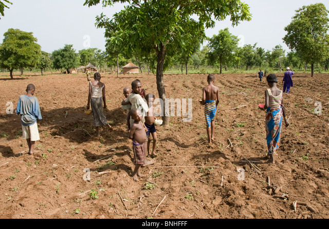 Children sowing maize from a Fulani compound in the village Sor No. 1 in the Gonja Triangle, Damango district. - Stock Image