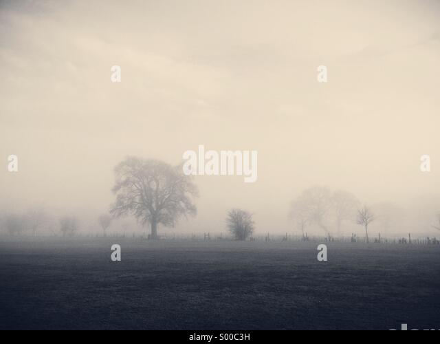 A misty morning in Wiltshire. - Stock Image