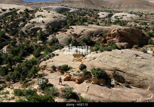 Hiker on tilted rock layers Dinosaur National Monument Utah - Stock Image