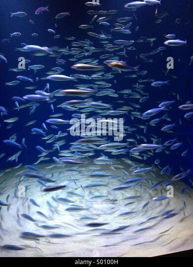 Shawl of fish - Stock Image