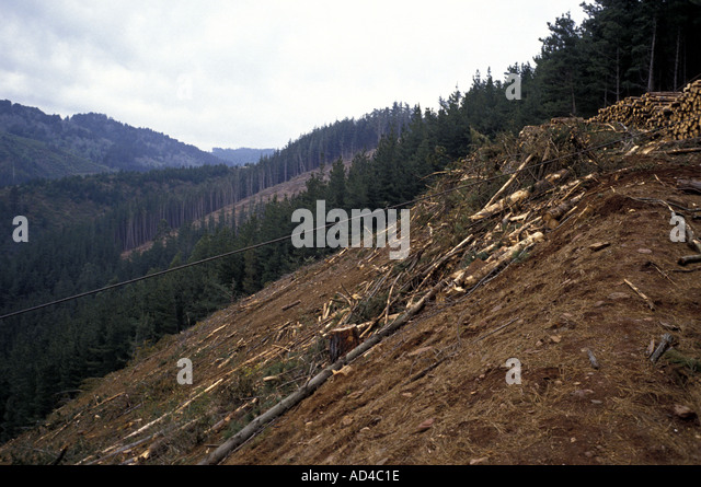 CHILE DEFORESTATION IN THE SOUTHERN FORESTS - Stock Image