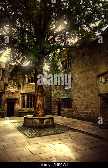 castle courtyard with an old beautiful tree - Stock Image