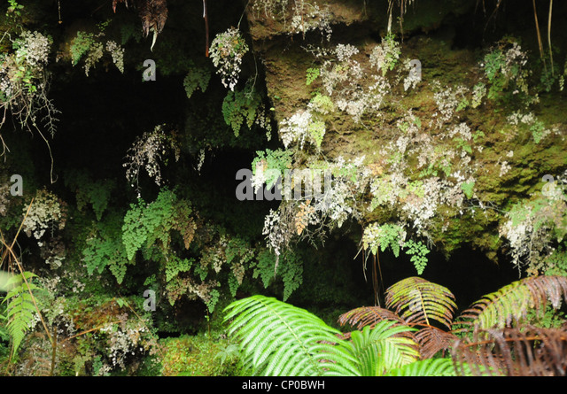Hilo Hawaii is a town surrounded by water falls and tropical gardens with a mixture of Asian and Polynesian cultures. - Stock-Bilder