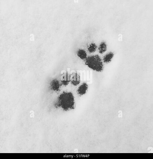 Paw prints in the snow - Stock-Bilder