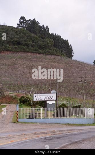 Mioranza Winery, Forels da Cunha, Brazil - Stock Image