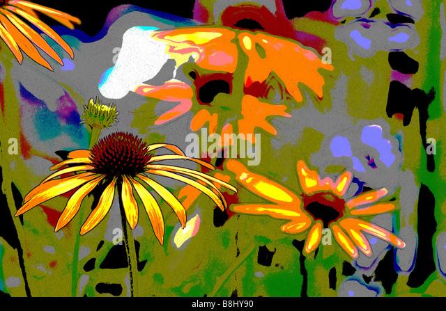 ECHINACEA ARTS PRIDE - Stock Image