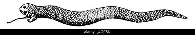 Tatzelwurm 1841 - Stock Image