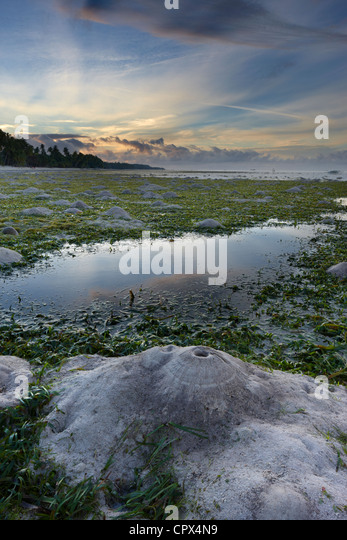crabs burrows exposed by the low tide, San Juan Beach, Siquijor, The Visayas, Philippines - Stock Image