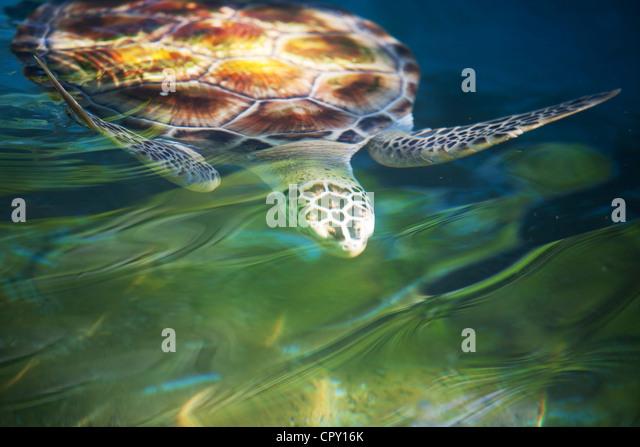 turtle - Stock-Bilder