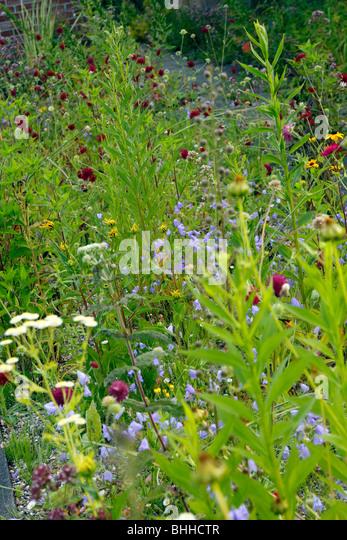 Gooseberry Bush Nursery