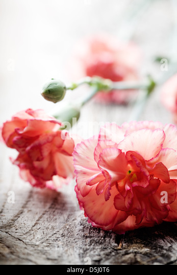 Close up of branches of dianthus on wooden table - Stock Image